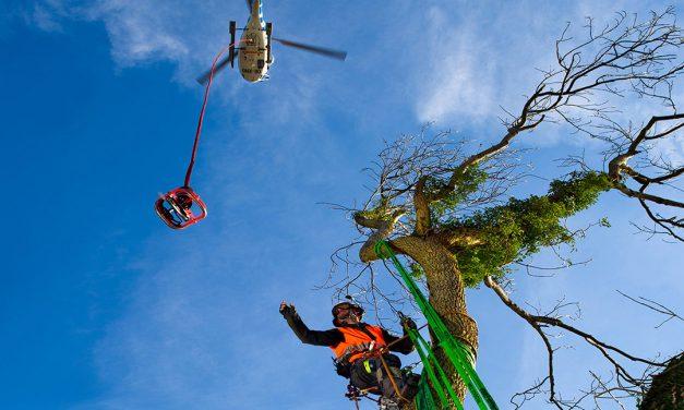 Spektakulärer Baumschnitt