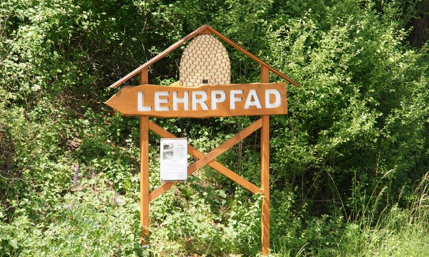 Kirchschlags Imker laden zum Tag des offenen Bienenstocks