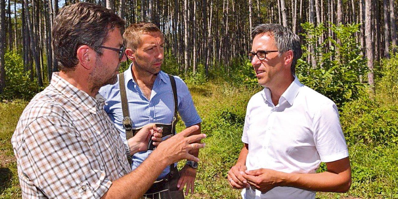 Der Wald steht vor großen Herausforderungen