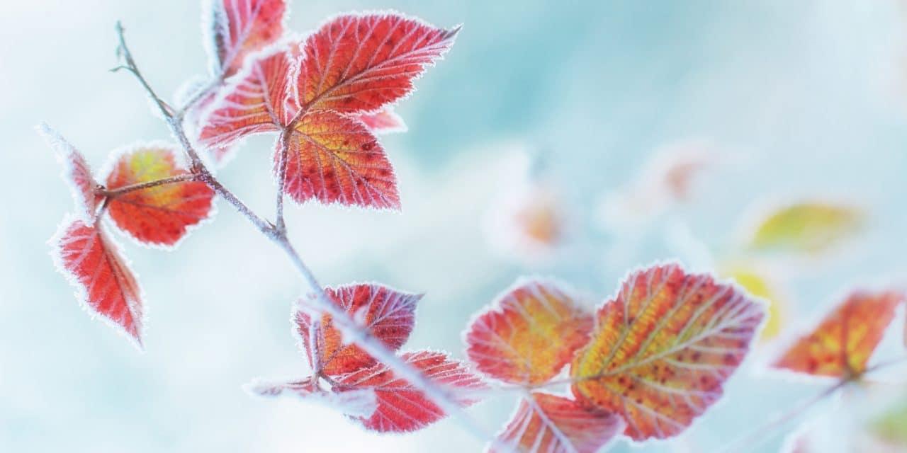 Der erste Frost als Vorbote des Winters