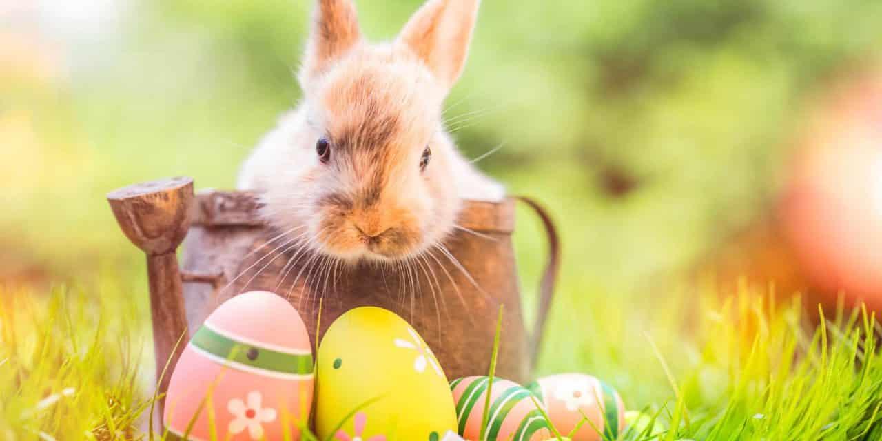 Was Sie über das Osterfest wissen müssen