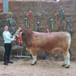 """Stier """"Karlos"""" ist der Star der Rinderschau"""