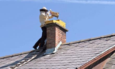 Bienen-Alarm am Dach