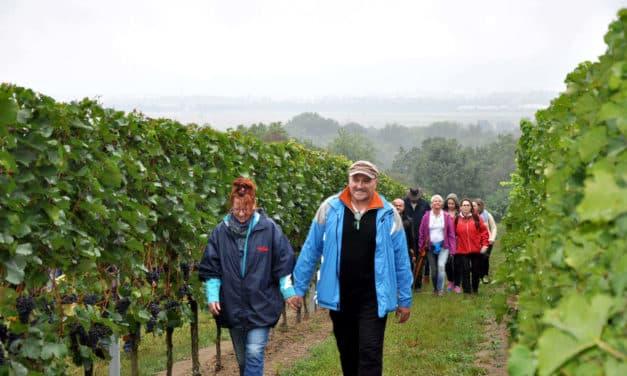 Wandern und Genießen in den Weinbergen