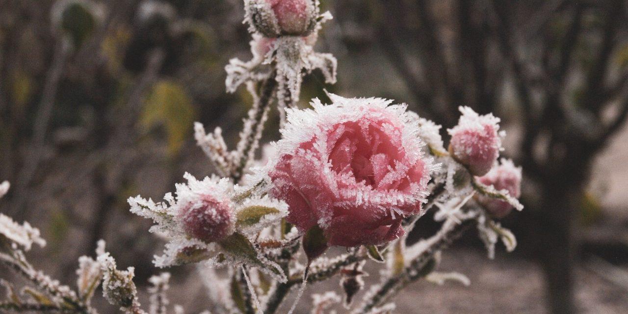 Es wird wieder Winter …