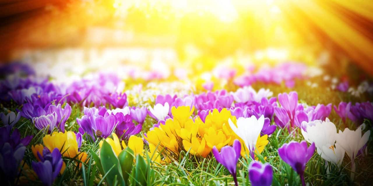 Der Frühling lässt sich nicht aufhalten