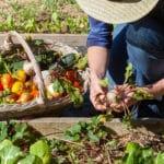 Eigenversorgung im Garten – geht das?