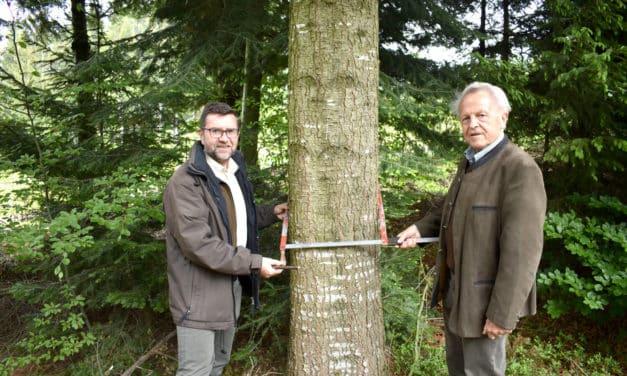 Nachgemessen: Waldwirtschaft der Zukunft