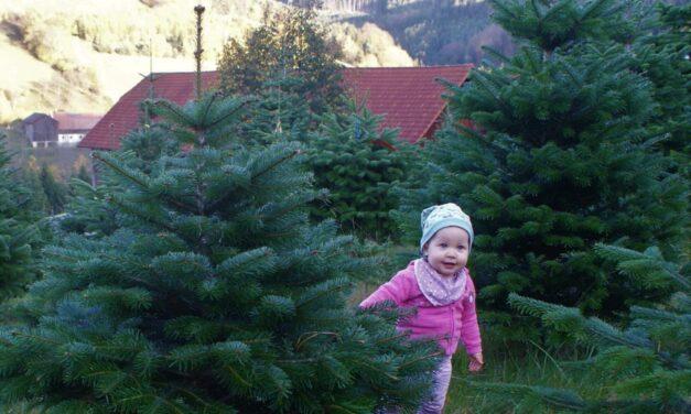 Der heimische Christbaum aus der Buckligen Welt verzaubert auch Ihre Wohnung: Weihnachten daheim – genießen!