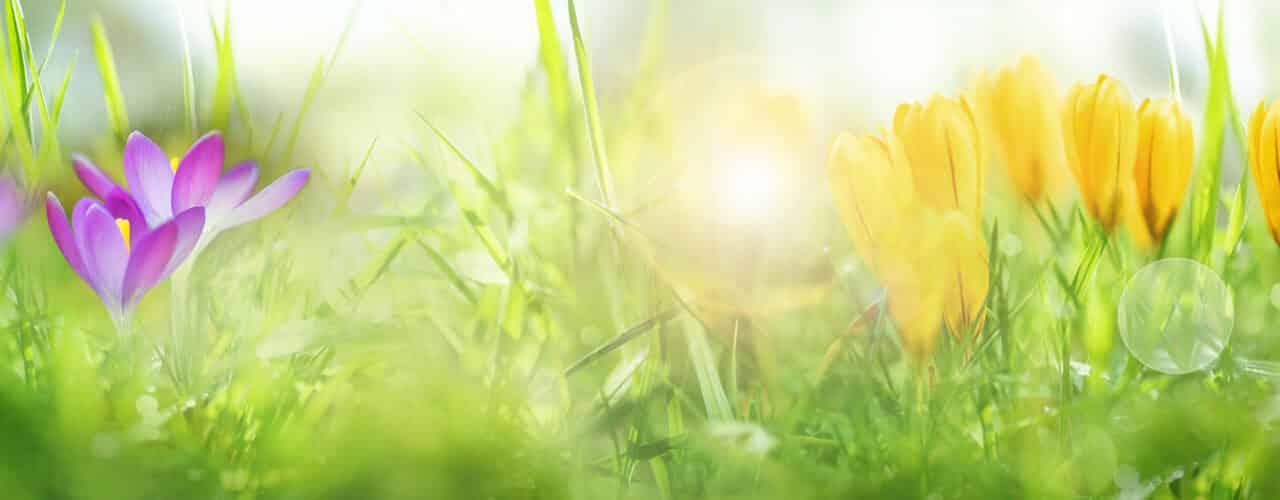 Der Frühling ist schon spürbar