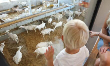 Bock auf Ziege? Einkauf als Erlebnis auf Mandl's Ziegenhof