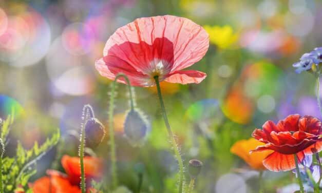 Blütenpracht mit Sommerblumen