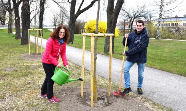 Mehr grün für die Gartenstadt Ternitz